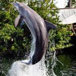 florida keys dolphin swim