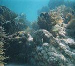 snorkeling pennekamp key largo fl