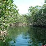 key largo eco tour