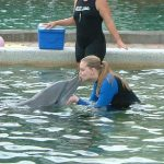 Miami Dolphin Watching