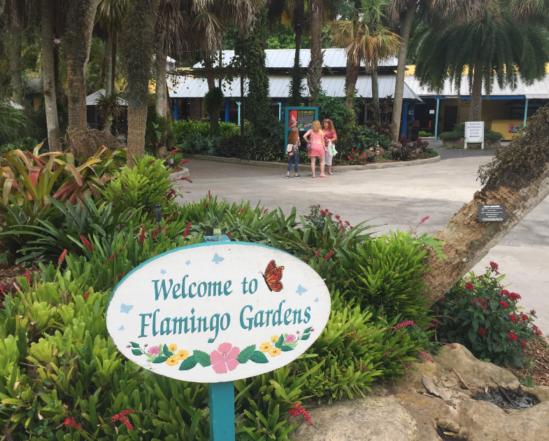 Welcome to Flamingo Gardens