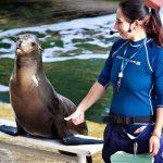 key largo dolphin swim