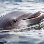 swim with the dolphins key largo florida