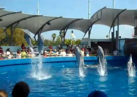 Dolphin Shows And More In Miami