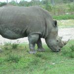 Rhinos Lion Country Safari