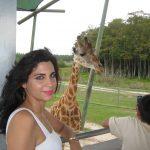 Giraffe Lion Country Safari
