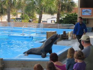 Sea Lion Show Gulf World Panama City