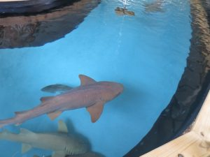 Sharks Gulf World Panama City Beach