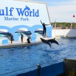 dolphin show gulf world panama city florida