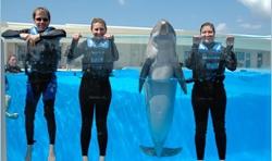 Dolphin Swim Daytona Beach