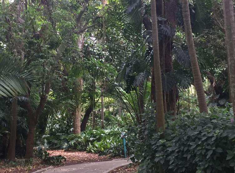 Big Trees at Flamingo Gardens