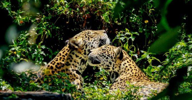 Belize, A World Of Wonder & Wilderness