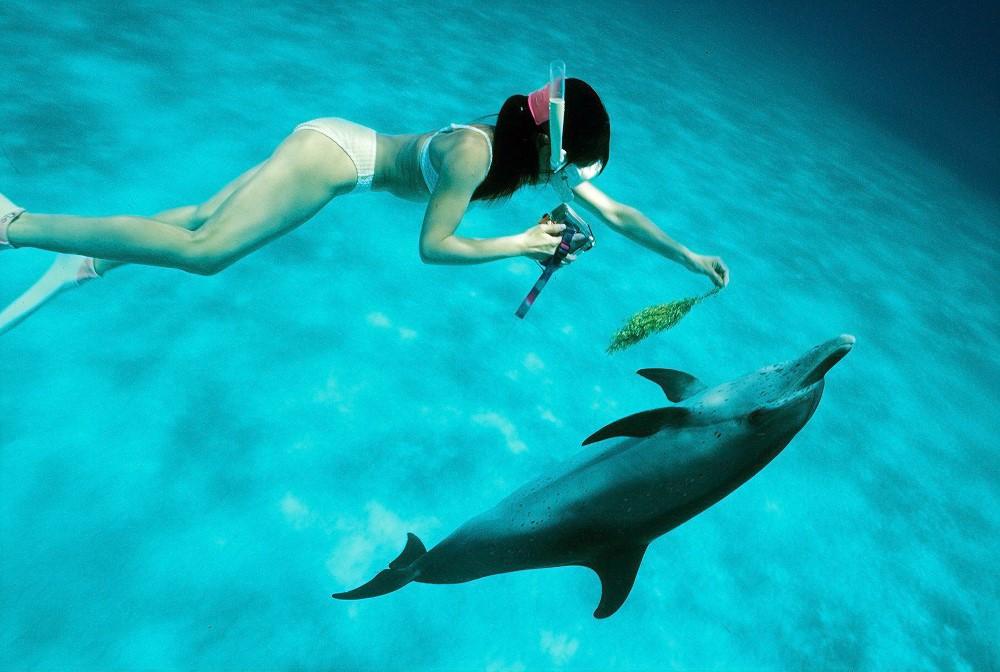 Bimini Wild Dolphin Encounters