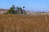 Florida-Trail-Big-Cypres2