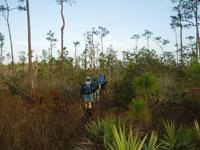 Florida-Trail-Big-Cypres4
