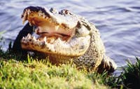 Floridas-Wild-Side-6
