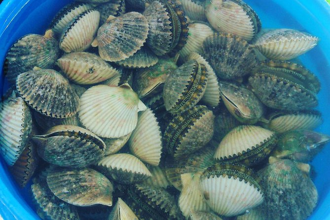 Homosassa And Crystal River Area Scallop Tours