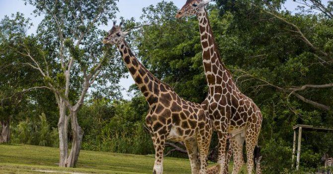 Miami Metro Zoo: Animals And More Animals