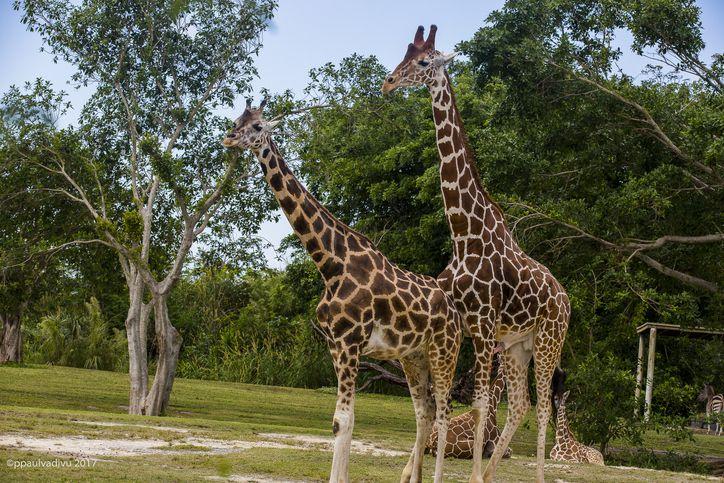 Miami Metro Zoo Animals And More Animals