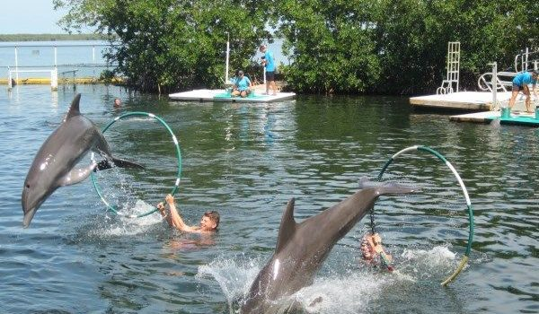 My Experience Of Swimming With The Dolphins In The Florida Keys