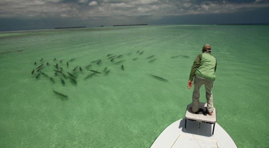 Tarpon Fishing In The Florida Keys