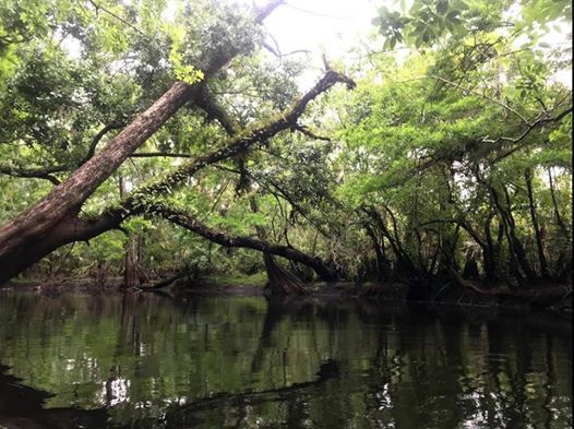 The Wild And Scenic Loxahatchee River