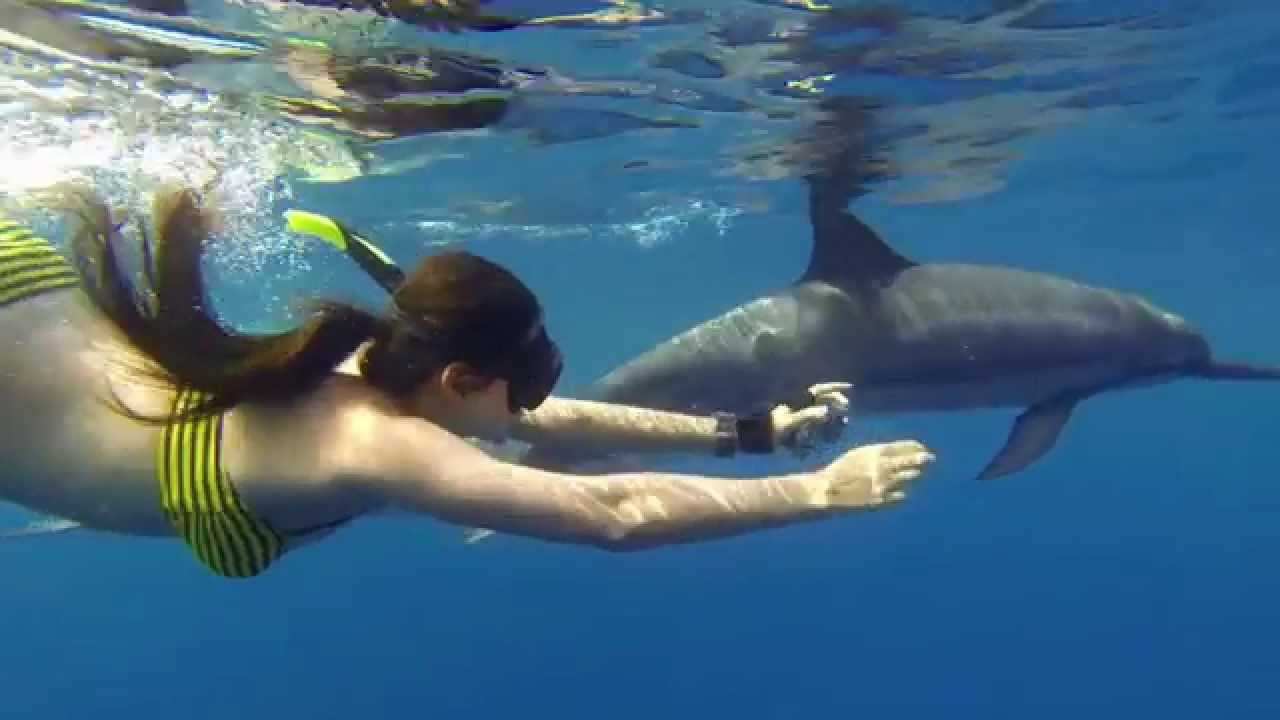 Wild About Dolphins, Wild Dolphin Experience