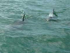 dolphincloseup