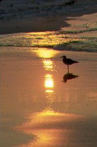 florida-beaches3