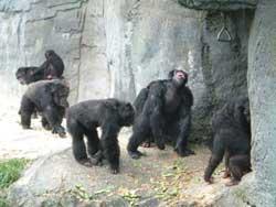 gorillafamily