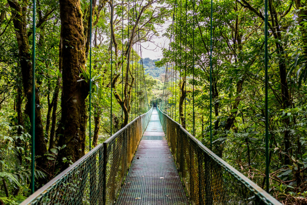 Walking On Hanging Bridges In Cloudforest - Travel Destination Costa Rica