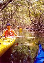 mangrovekayak