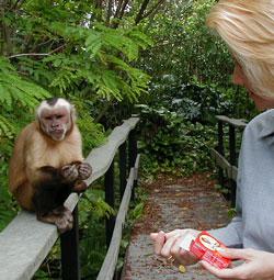 monkey-jungle