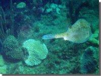ocean_stingray1