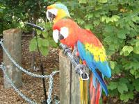 parrot-jungle3