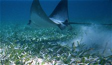 ray_fish