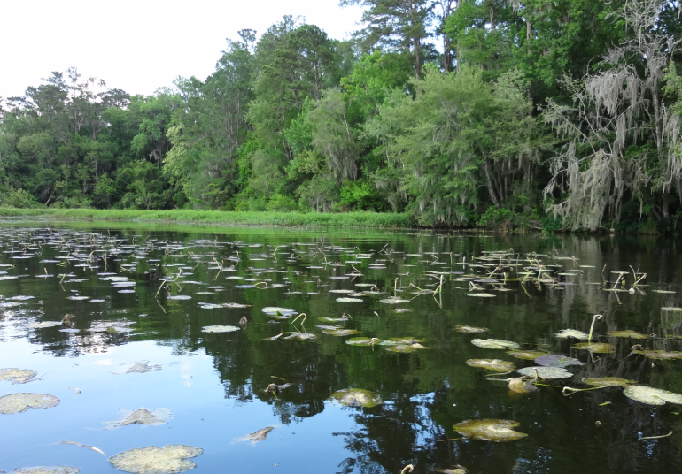 Florida Wildlife- Take a Walk on Florida's Wild Side