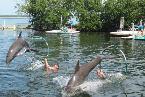 My Experience Of The Florida Keys Dolphin Swim