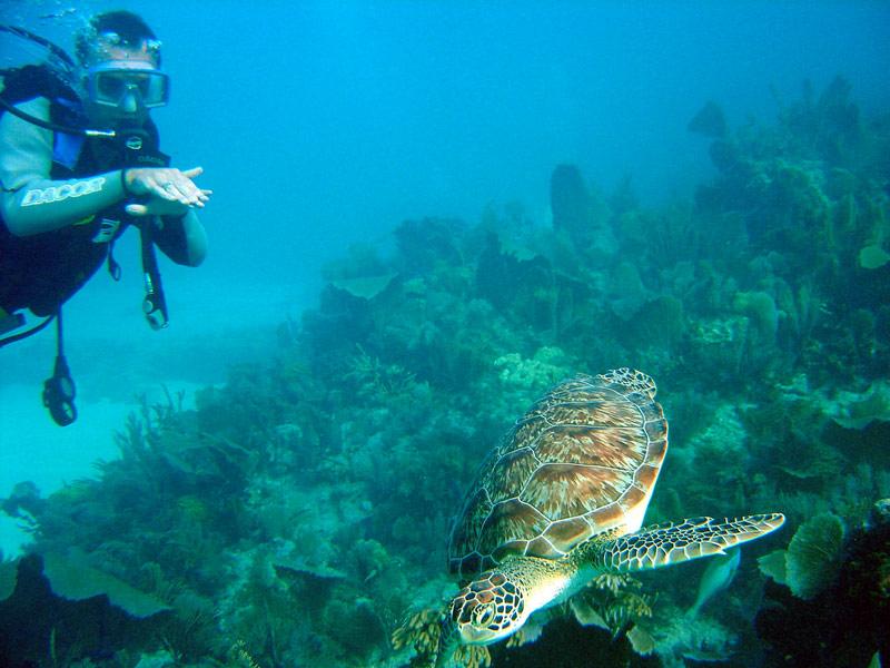 Snorkeling Vacation In Key Largo