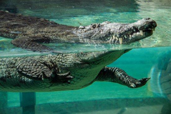 Miami Metro Zoo Review