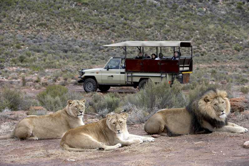 Lion Country Safari – A West Palm Beach Landmark Attraction
