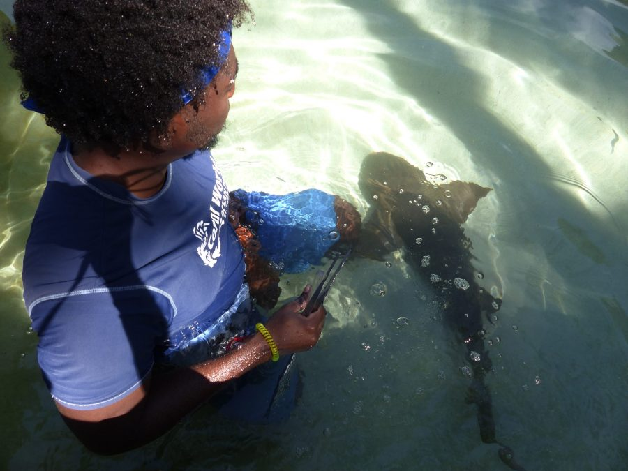 Sharks in St Thomas