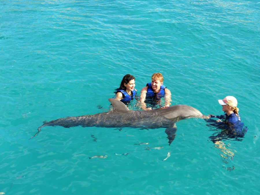 Swimming with the dolphins St Thomas