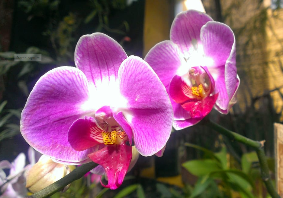 wonderful plants to see
